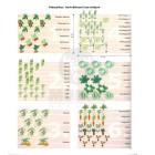 Klasszikus kertváltozatok laza talajra